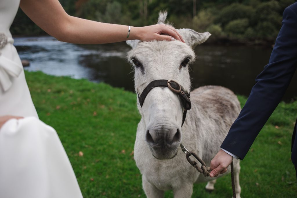 Gemma and Paddy New Ross wedding couple with a cute farm animal donkey